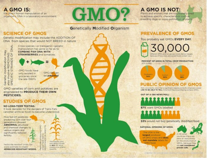 genetical modified products (gmo)