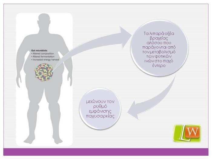 λιπαρά οξέα βραχείας αλύσσου και παχυσαρκία
